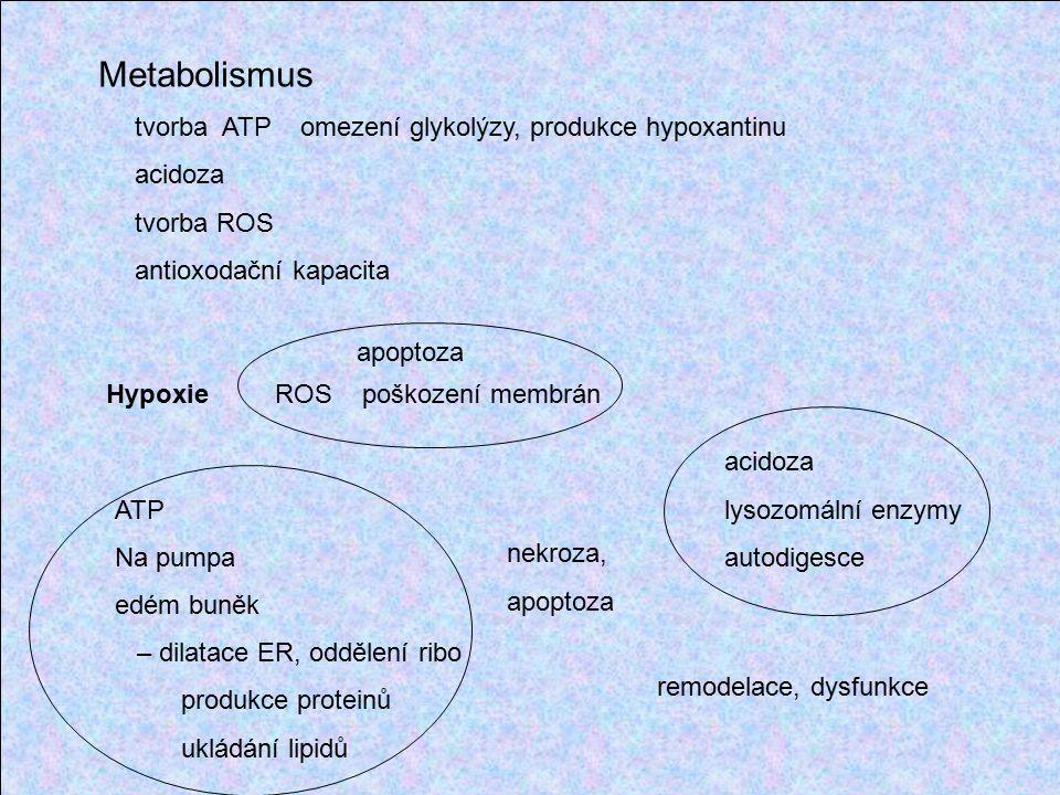 Metabolismus tvorba ATP omezení glykolýzy, produkce hypoxantinu acidoza tvorba ROS antioxodační kapacita Hypoxie ROS poškození membrán ATP Na pumpa edém buněk – dilatace ER, oddělení ribo produkce proteinů ukládání lipidů apoptoza nekroza, apoptoza acidoza lysozomální enzymy autodigesce remodelace, dysfunkce