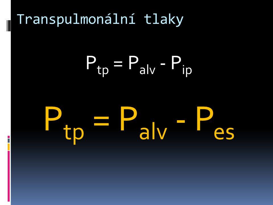 Transpulmonální tlaky P tp = P alv - P ip P tp = P alv - P es