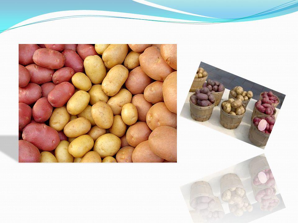 Ekonomika Brambory patří mezi plodiny, jejichž pěstování je ekonomicky vysoce náročné.