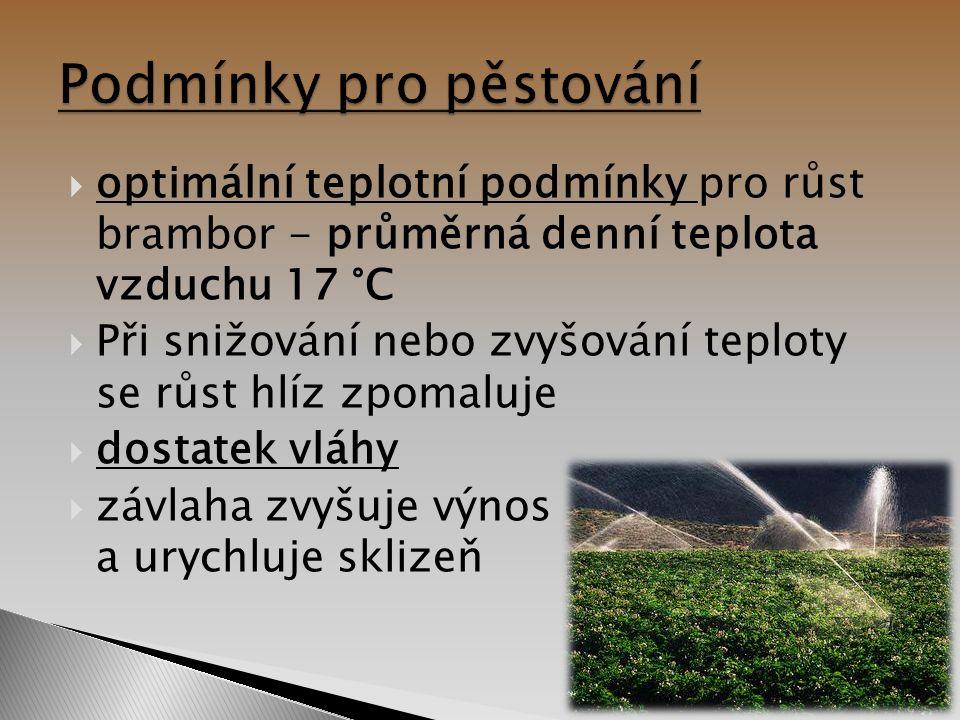  optimální teplotní podmínky pro růst brambor - průměrná denní teplota vzduchu 17 °C  Při snižování nebo zvyšování teploty se růst hlíz zpomaluje  dostatek vláhy  závlaha zvyšuje výnos a urychluje sklizeň