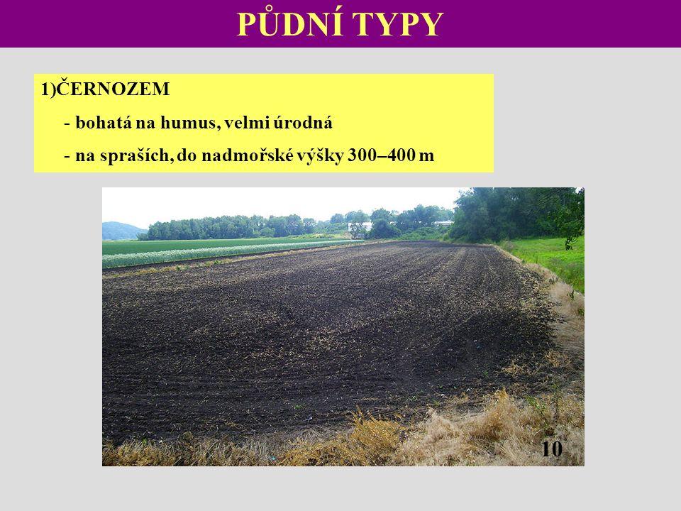 PŮDNÍ TYPY 1)ČERNOZEM - bohatá na humus, velmi úrodná - na spraších, do nadmořské výšky 300–400 m 10