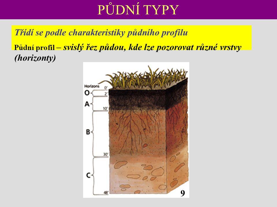 PŮDNÍ TYPY Třídí se podle charakteristiky půdního profilu Půdní profil – svislý řez půdou, kde lze pozorovat různé vrstvy (horizonty) 9