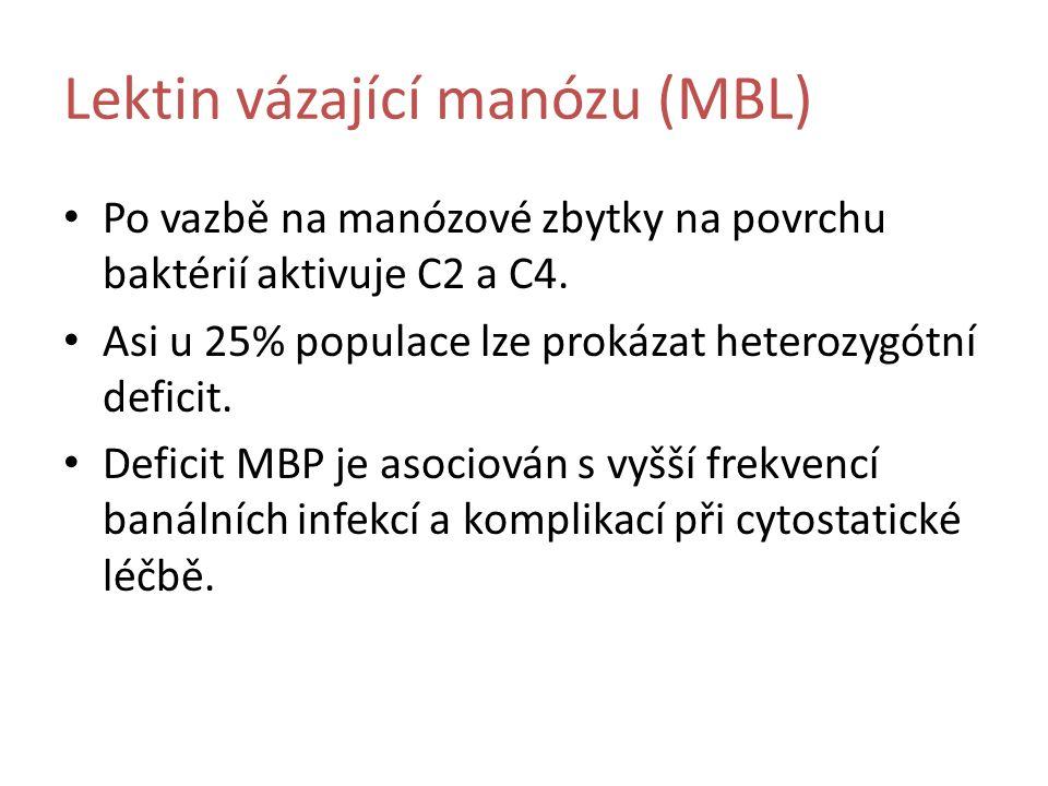 Lektin vázající manózu (MBL) Po vazbě na manózové zbytky na povrchu baktérií aktivuje C2 a C4.