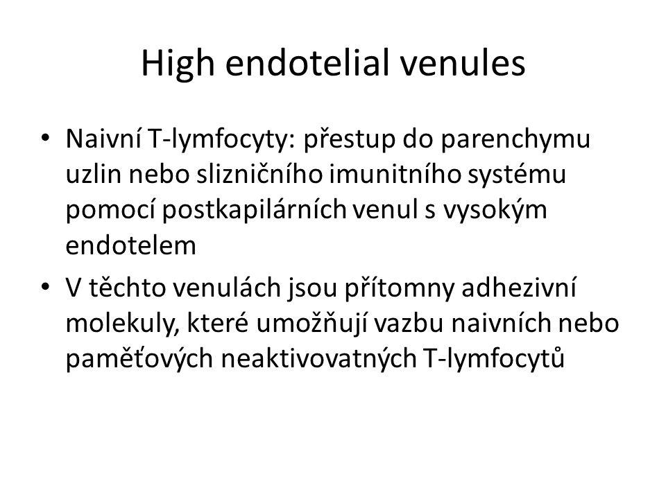 High endotelial venules Naivní T-lymfocyty: přestup do parenchymu uzlin nebo slizničního imunitního systému pomocí postkapilárních venul s vysokým endotelem V těchto venulách jsou přítomny adhezivní molekuly, které umožňují vazbu naivních nebo paměťových neaktivovatných T-lymfocytů