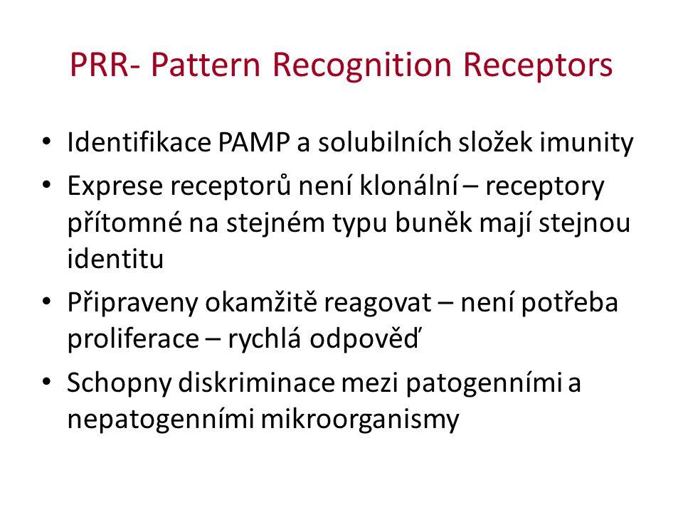 PRR- Pattern Recognition Receptors Identifikace PAMP a solubilních složek imunity Exprese receptorů není klonální – receptory přítomné na stejném typu buněk mají stejnou identitu Připraveny okamžitě reagovat – není potřeba proliferace – rychlá odpověď Schopny diskriminace mezi patogenními a nepatogenními mikroorganismy