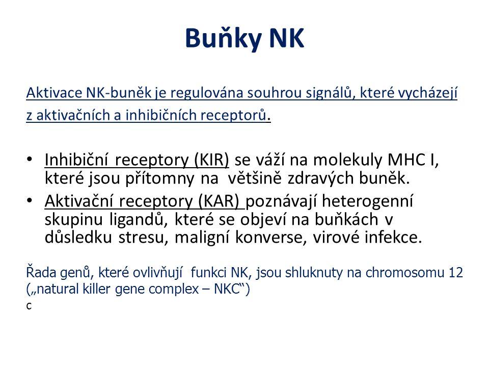 Buňky NK Aktivace NK-buněk je regulována souhrou signálů, které vycházejí z aktivačních a inhibičních receptorů.