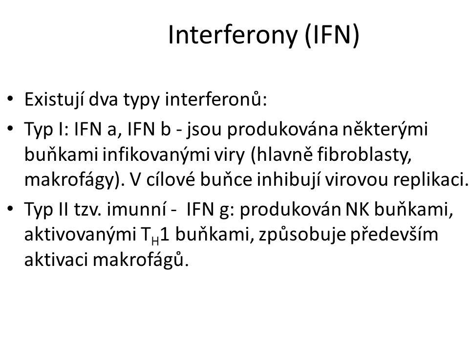Interferony (IFN) Existují dva typy interferonů: Typ I: IFN a, IFN b - jsou produkována některými buňkami infikovanými viry (hlavně fibroblasty, makrofágy).