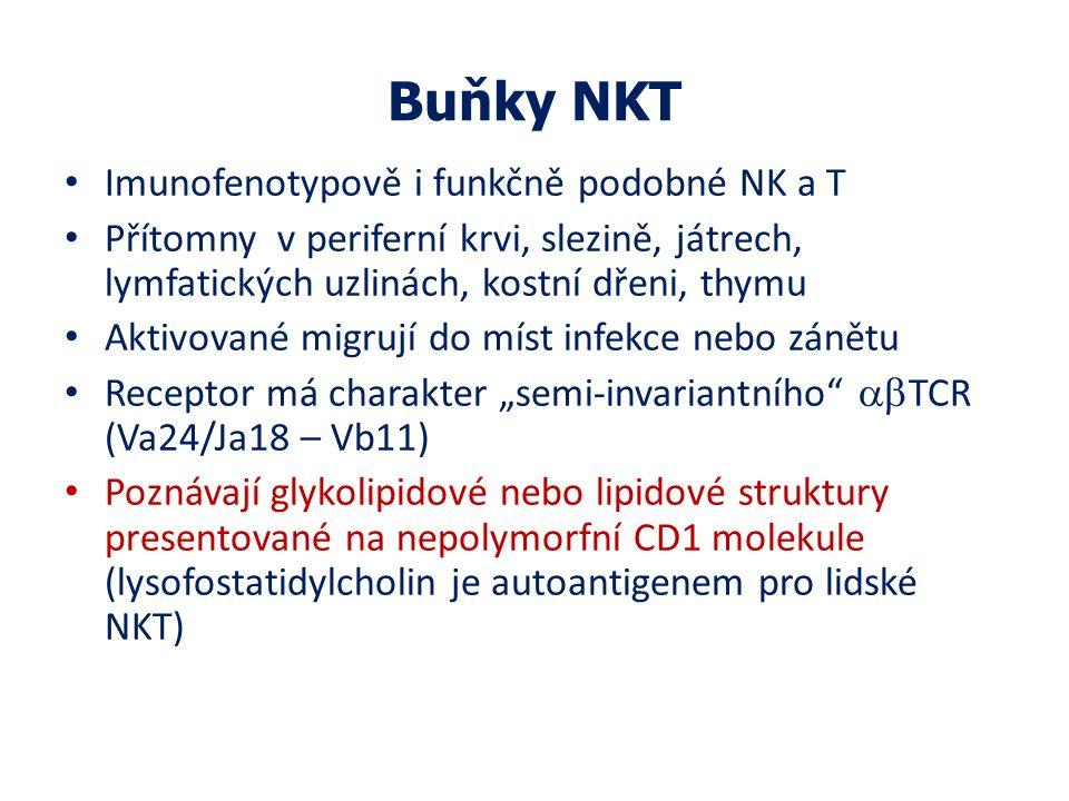"""Buňky NKT Imunofenotypově i funkčně podobné NK a T Přítomny v periferní krvi, slezině, játrech, lymfatických uzlinách, kostní dřeni, thymu Aktivované migrují do míst infekce nebo zánětu Receptor má charakter """"semi-invariantního  TCR (Va24/Ja18 – Vb11) Poznávají glykolipidové nebo lipidové struktury presentované na nepolymorfní CD1 molekule (lysofostatidylcholin je autoantigenem pro lidské NKT)"""