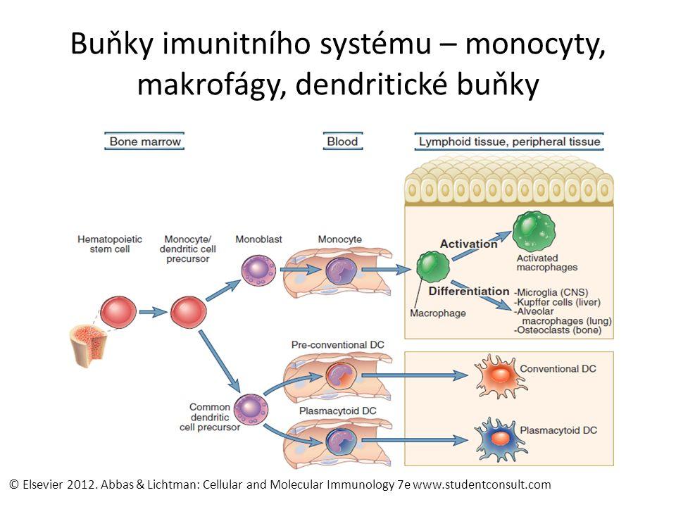 Buňky imunitního systému – monocyty, makrofágy, dendritické buňky © Elsevier 2012.