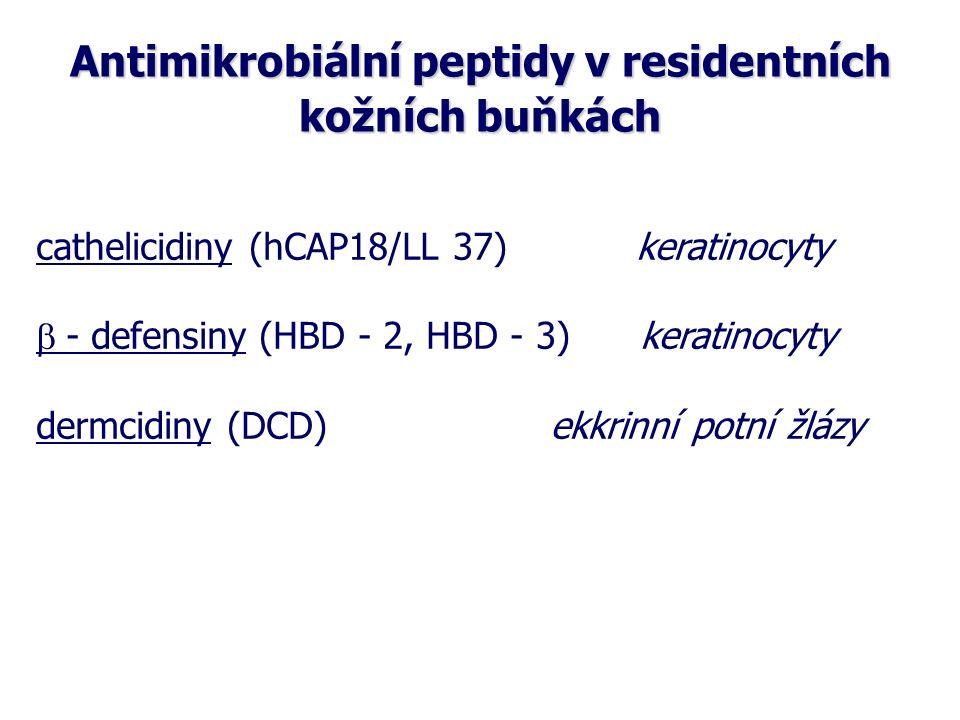 Antimikrobiální peptidy v residentních kožních buňkách  cathelicidiny (hCAP18/LL 37) keratinocyty  - defensiny (HBD - 2, HBD - 3) keratinocyty dermcidiny (DCD) ekkrinní potní žlázy