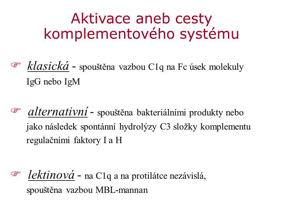  klasická - spouštěna vazbou C1q na Fc úsek molekuly IgG nebo IgM F alternativní - spouštěna bakteriálními produkty nebo jako následek spontánní hydrolýzy C3 složky komplementu regulačními faktory I a H F lektinová - na C1q a na protilátce nezávislá, spouštěna vazbou MBL-mannan Aktivace aneb cesty komplementového systému
