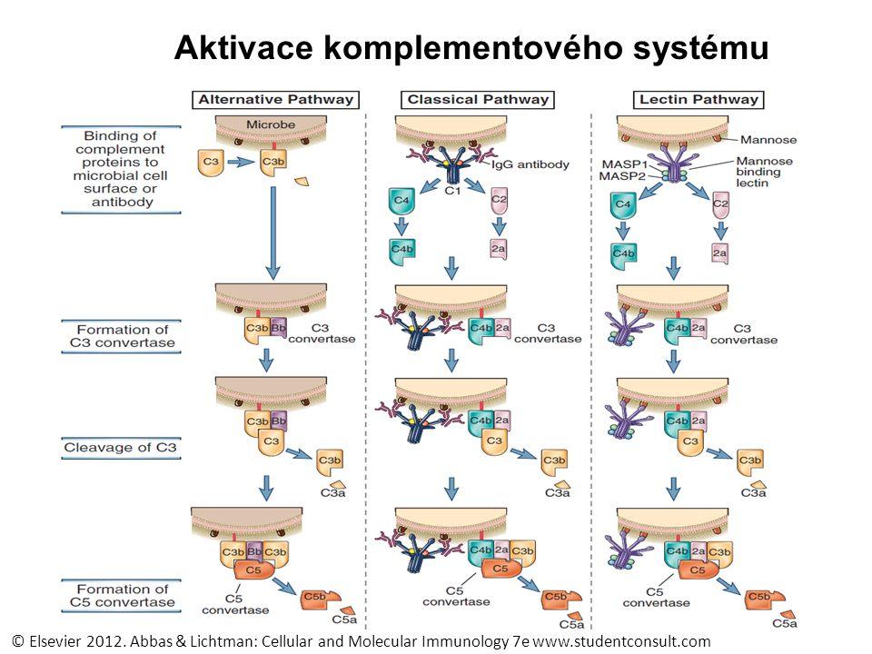 Aktivace komplementového systému membranolytický komplex © Elsevier 2012.