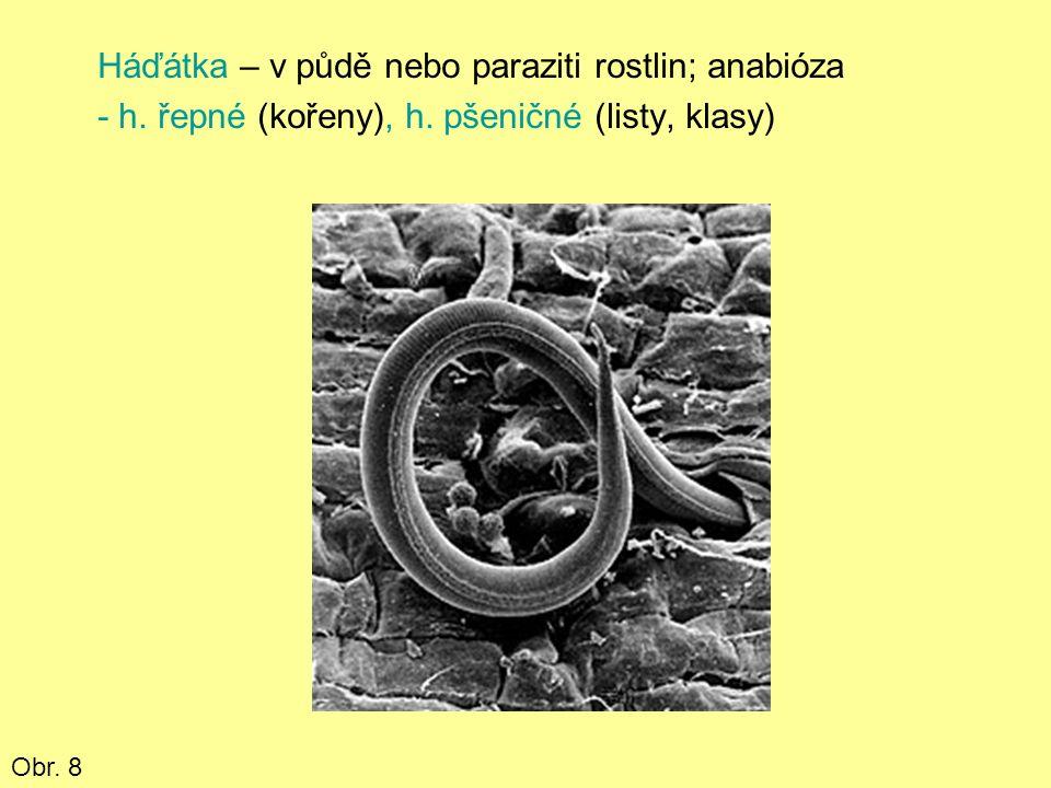 Háďátka – v půdě nebo paraziti rostlin; anabióza - h.