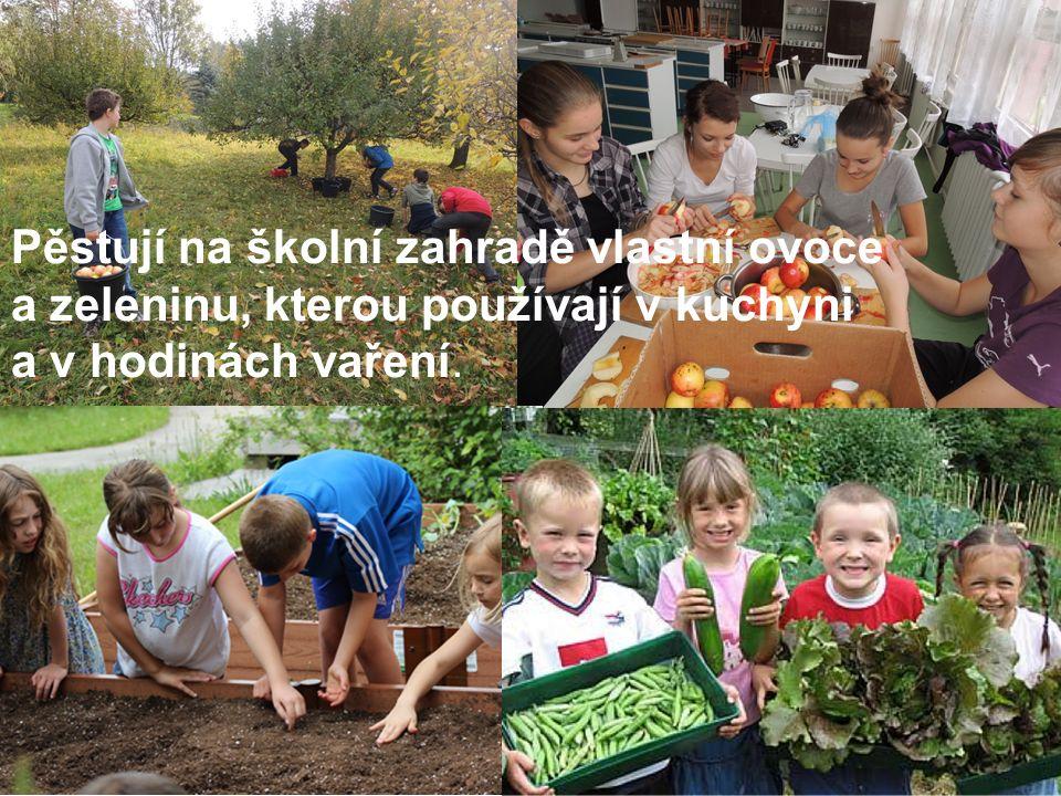 Pěstují na školní zahradě vlastní ovoce a zeleninu, kterou používají v kuchyni a v hodinách vaření.