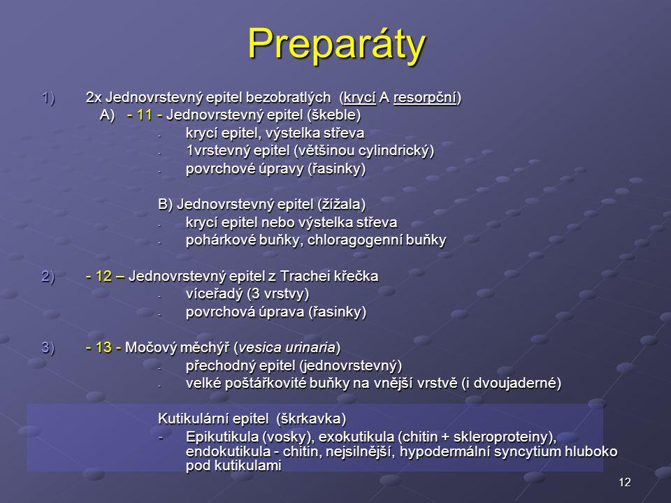 12Preparáty 1)2x Jednovrstevný epitel bezobratlých (krycí A resorpční) A) - 11 - Jednovrstevný epitel (škeble) - krycí epitel, výstelka střeva - 1vrstevný epitel (většinou cylindrický) - povrchové úpravy (řasinky) B) Jednovrstevný epitel (žížala) - krycí epitel nebo výstelka střeva - pohárkové buňky, chloragogenní buňky 2)- 12 – Jednovrstevný epitel z Trachei křečka - víceřadý (3 vrstvy) - povrchová úprava (řasinky) 3)- 13 - Močový měchýř (vesica urinaria) - přechodný epitel (jednovrstevný) - velké poštářkovité buňky na vnější vrstvě (i dvoujaderné) Kutikulární epitel (škrkavka) -Epikutikula (vosky), exokutikula (chitin + skleroproteiny), endokutikula - chitin, nejsilnější, hypodermální syncytium hluboko pod kutikulami