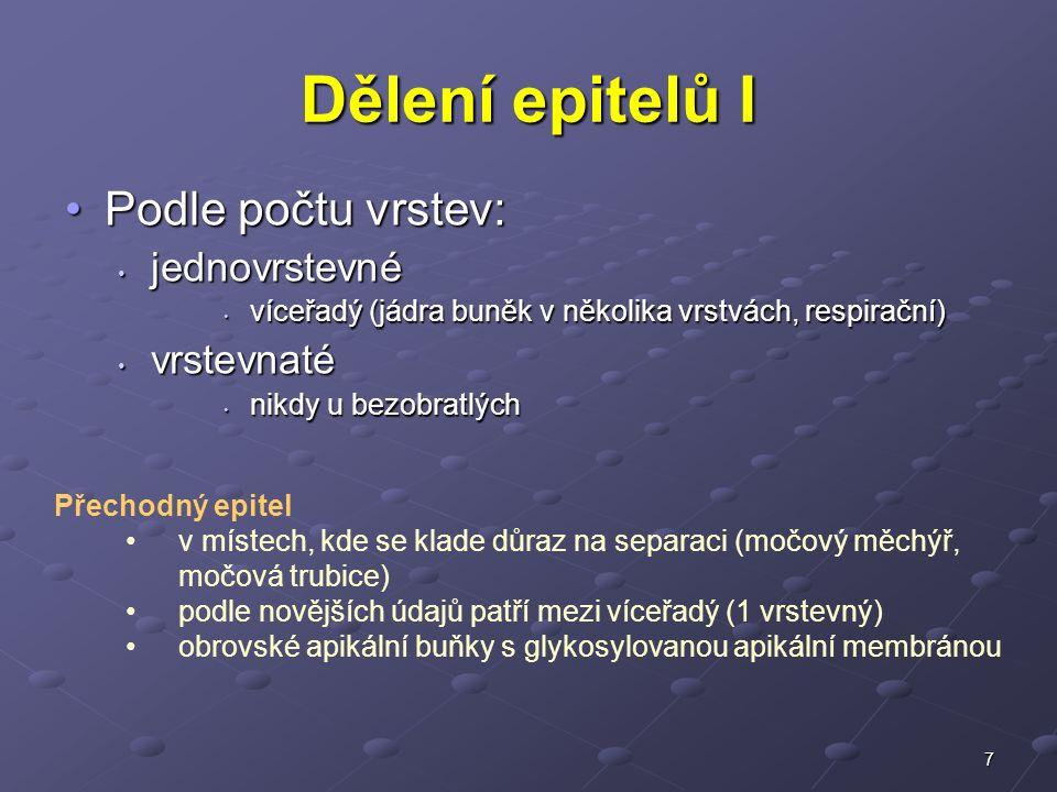7 Dělení epitelů I Podle počtu vrstev:Podle počtu vrstev: jednovrstevné jednovrstevné víceřadý (jádra buněk v několika vrstvách, respirační) víceřadý (jádra buněk v několika vrstvách, respirační) vrstevnaté vrstevnaté nikdy u bezobratlých nikdy u bezobratlých Přechodný epitel v místech, kde se klade důraz na separaci (močový měchýř, močová trubice) podle novějších údajů patří mezi víceřadý (1 vrstevný) obrovské apikální buňky s glykosylovanou apikální membránou