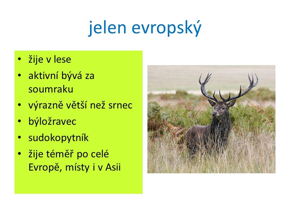 jelen evropský žije v lese aktivní bývá za soumraku výrazně větší než srnec býložravec sudokopytník žije téměř po celé Evropě, místy i v Asii