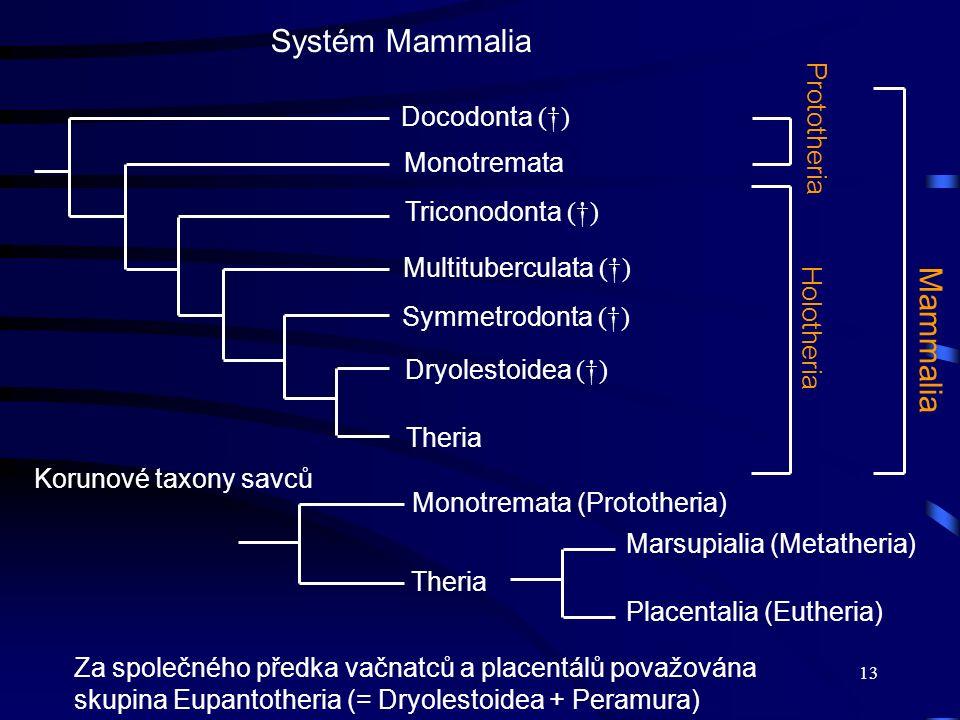 13 HolotheriaMammalia Systém Mammalia Docodonta (†) Monotremata Triconodonta (†) Multituberculata (†) Prototheria Symmetrodonta (†) Dryolestoidea (†)