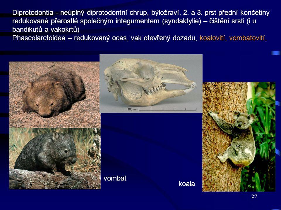 27 Diprotodontia - neúplný diprotodontní chrup, býložraví, 2. a 3. prst přední končetiny redukované přerostlé společným integumentem (syndaktylie) – č