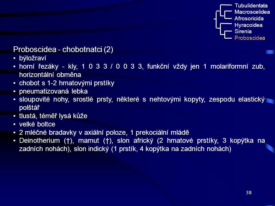 38 Proboscidea - chobotnatci (2) býložraví horní řezáky - kly, 1 0 3 3 / 0 0 3 3, funkční vždy jen 1 molariformní zub, horizontální obměna chobot s 1-