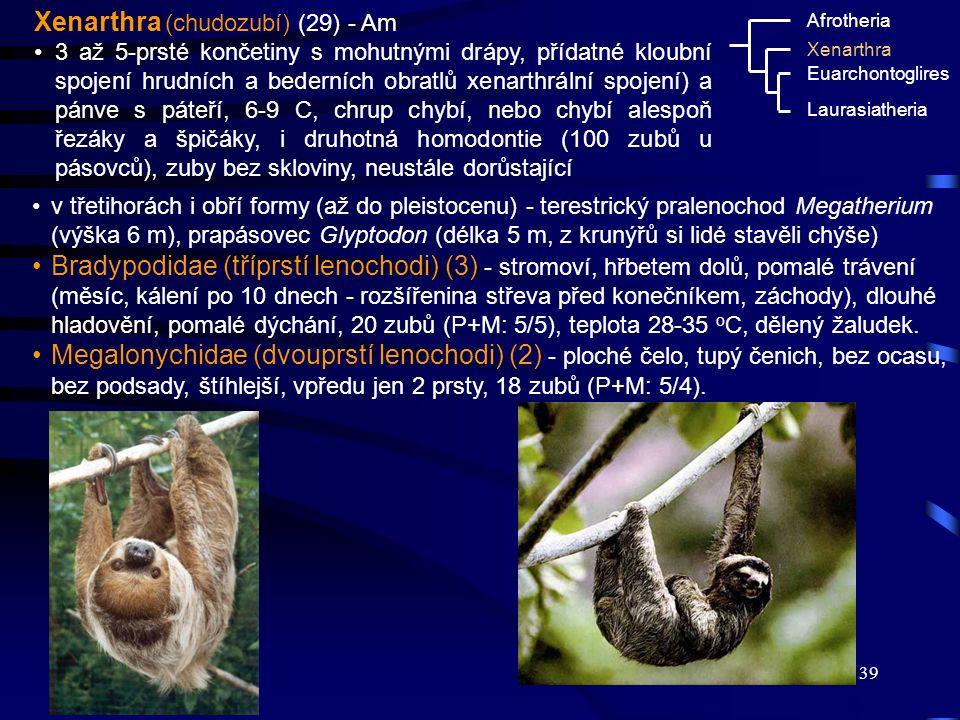 39 Xenarthra (chudozubí) (29) - Am 3 až 5-prsté končetiny s mohutnými drápy, přídatné kloubní spojení hrudních a bederních obratlů xenarthrální spojen