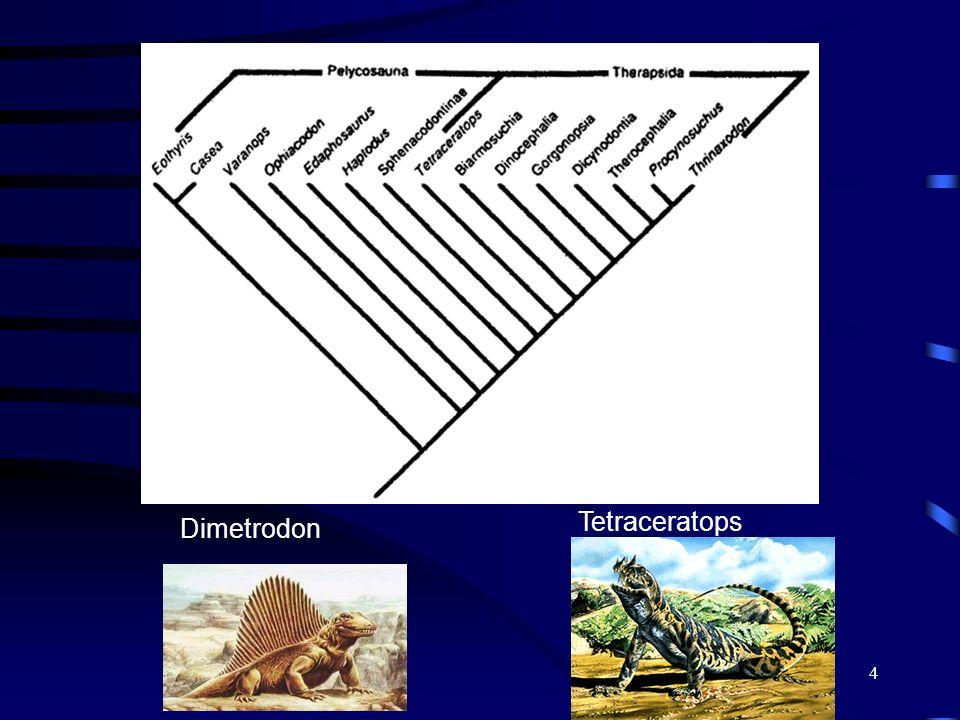 4 Tetraceratops Dimetrodon