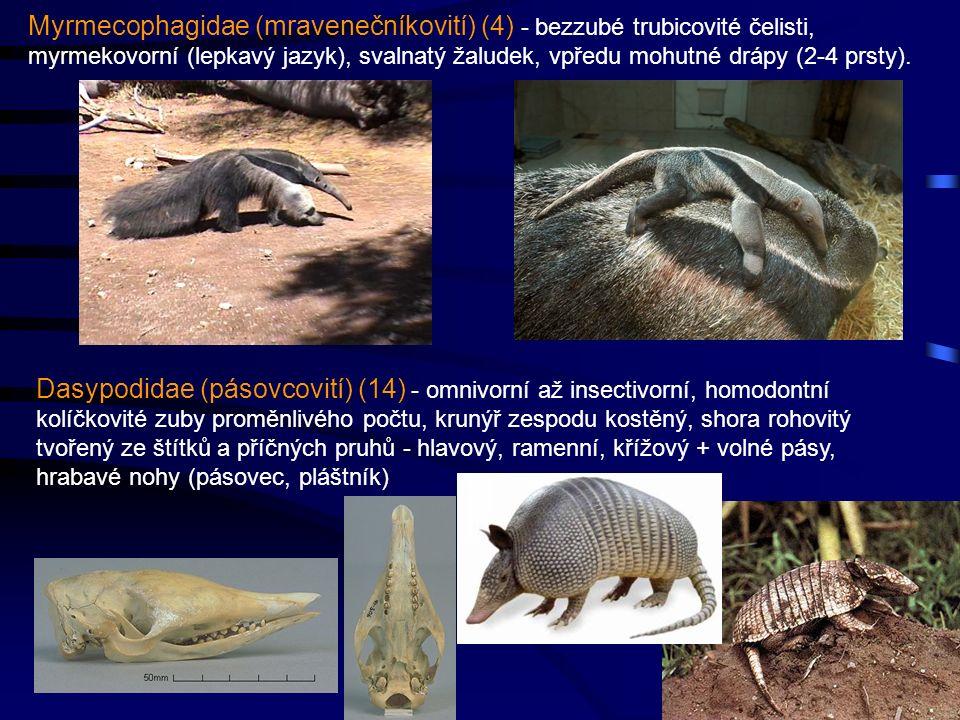 40 Dasypodidae (pásovcovití) (14) - omnivorní až insectivorní, homodontní kolíčkovité zuby proměnlivého počtu, krunýř zespodu kostěný, shora rohovitý