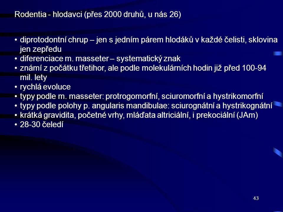 43 Rodentia - hlodavci (přes 2000 druhů, u nás 26) diprotodontní chrup – jen s jedním párem hlodáků v každé čelisti, sklovina jen zepředu diferenciace