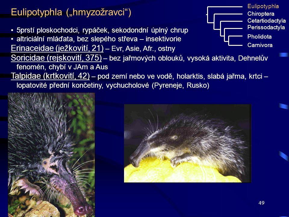 """49 Eulipotyphla (""""hmyzožravci"""") Eulipotyphla Chiroptera Cetartiodactyla Perissodactyla Pholidota Carnivora 5prstí ploskochodci, rypáček, sekodondní úp"""