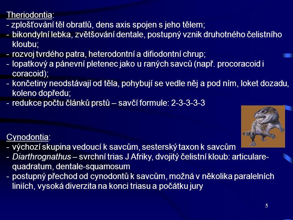5 Theriodontia: - zplošťování těl obratlů, dens axis spojen s jeho tělem; -bikondylní lebka, zvětšování dentale, postupný vznik druhotného čelistního