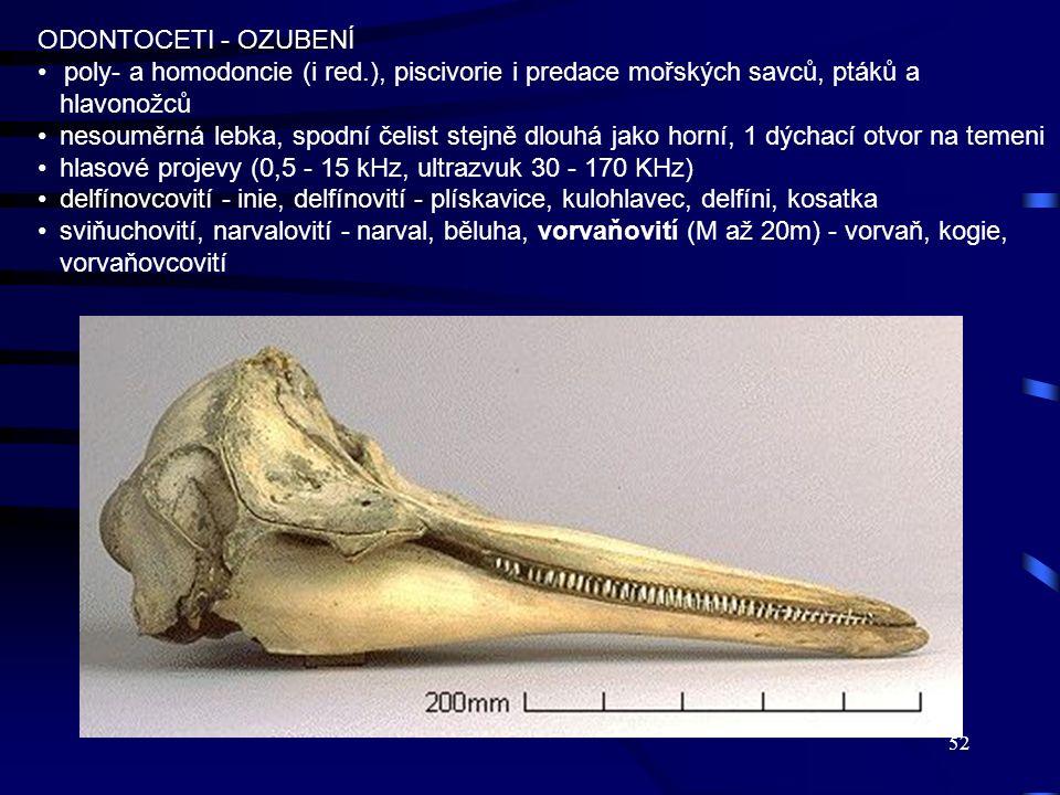 52 ODONTOCETI - OZUBENÍ poly- a homodoncie (i red.), piscivorie i predace mořských savců, ptáků a hlavonožců nesouměrná lebka, spodní čelist stejně dl