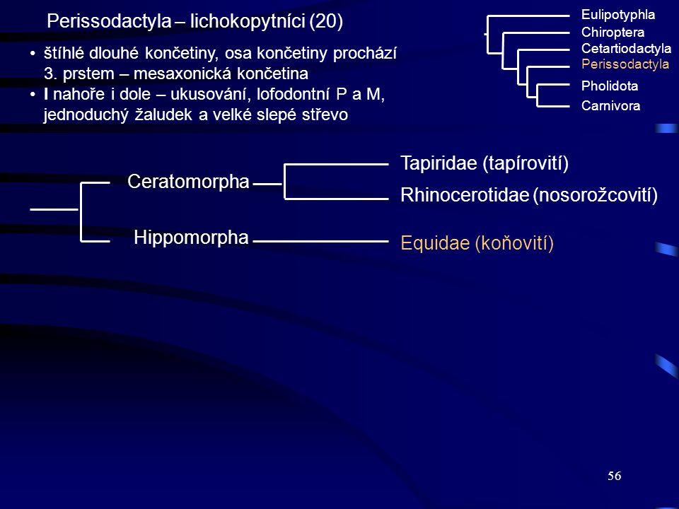 56 Perissodactyla – lichokopytníci (20) Eulipotyphla Chiroptera Cetartiodactyla Perissodactyla Pholidota Carnivora štíhlé dlouhé končetiny, osa končet