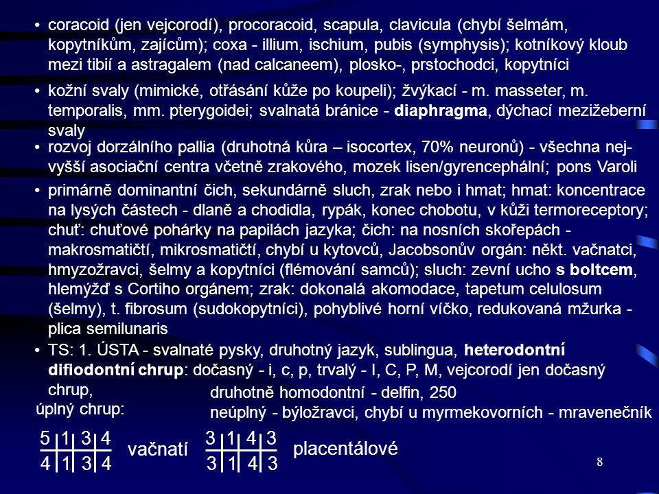 8 coracoid (jen vejcorodí), procoracoid, scapula, clavicula (chybí šelmám, kopytníkům, zajícům); coxa - illium, ischium, pubis (symphysis); kotníkový