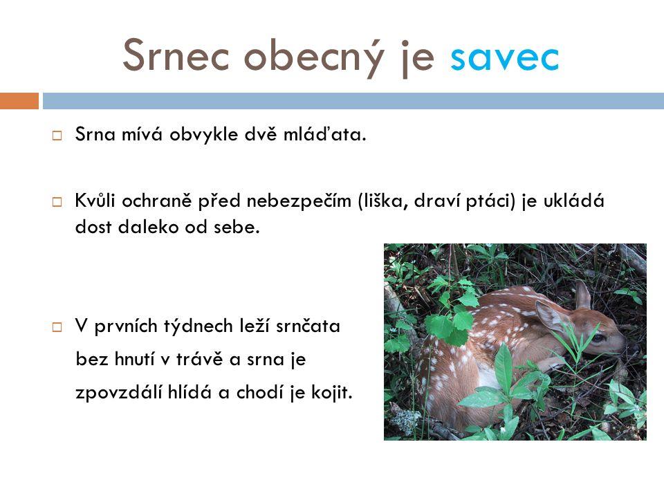 Srnec obecný je savec  Srna mívá obvykle dvě mláďata.  Kvůli ochraně před nebezpečím (liška, draví ptáci) je ukládá dost daleko od sebe.  V prvních