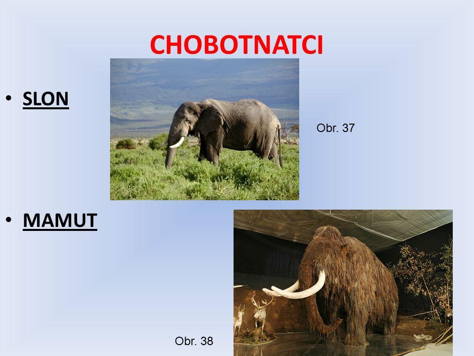 CHOBOTNATCI SLON MAMUT Obr. 37 Obr. 38