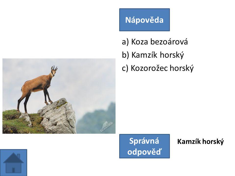 a) Koza bezoárová b) Kamzík horský c) Kozorožec horský Nápověda Správná odpověď Kamzík horský