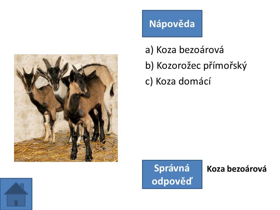 a) Koza bezoárová b) Kozorožec přímořský c) Koza domácí Nápověda Správná odpověď Koza bezoárová