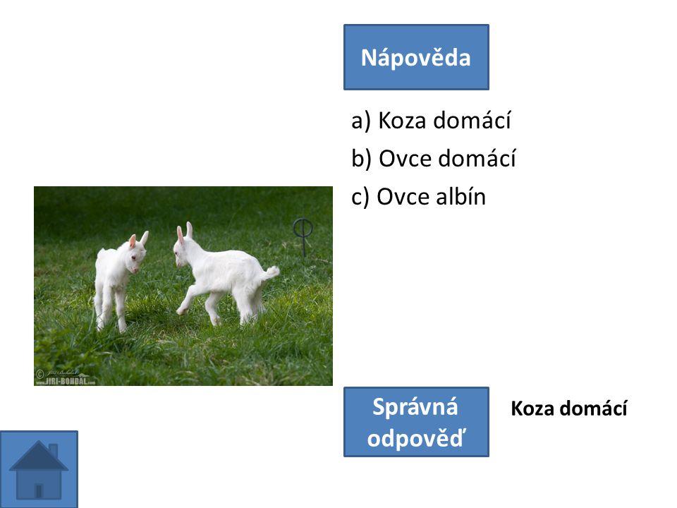 a) Koza domácí b) Ovce domácí c) Ovce albín Nápověda Správná odpověď Koza domácí