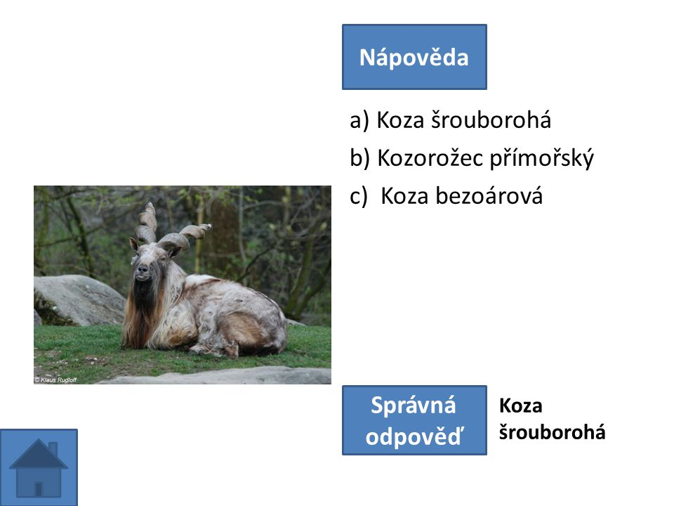 a) Koza šrouborohá b) Kozorožec přímořský c) Koza bezoárová Nápověda Správná odpověď Koza šrouborohá
