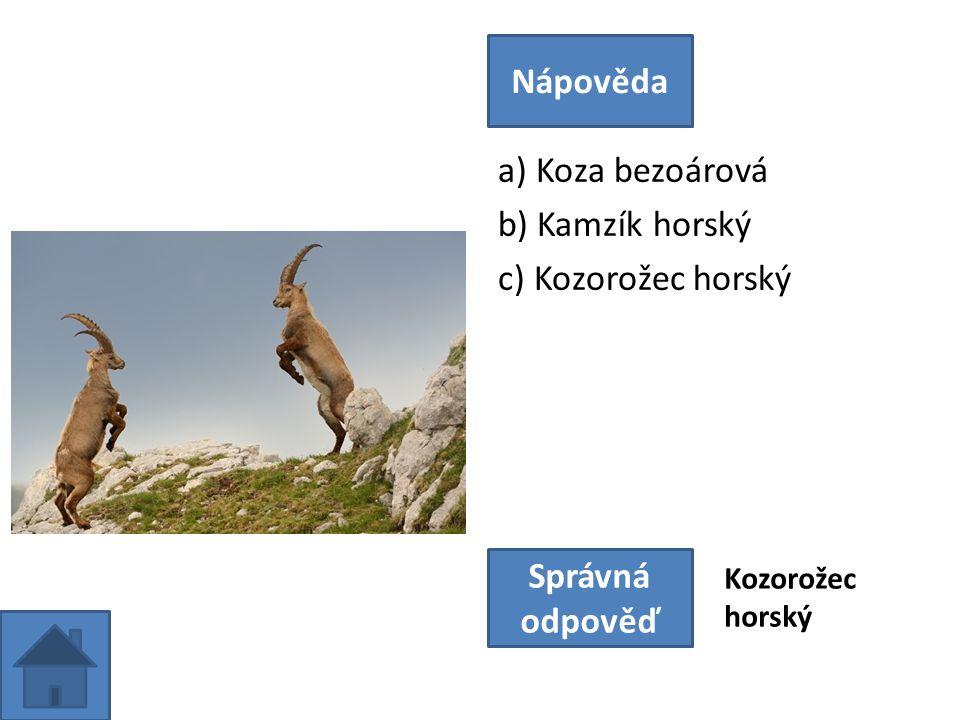 a) Koza bezoárová b) Kamzík horský c) Kozorožec horský Nápověda Správná odpověď Kozorožec horský