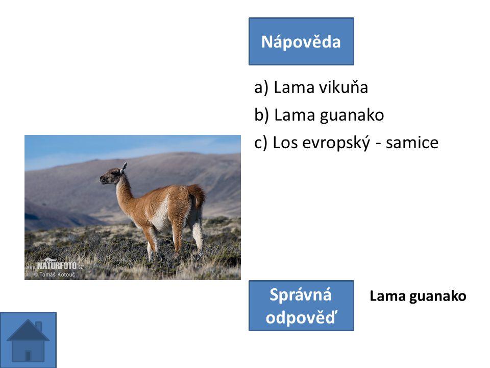 a) Lama vikuňa b) Lama guanako c) Los evropský - samice Nápověda Správná odpověď Lama guanako