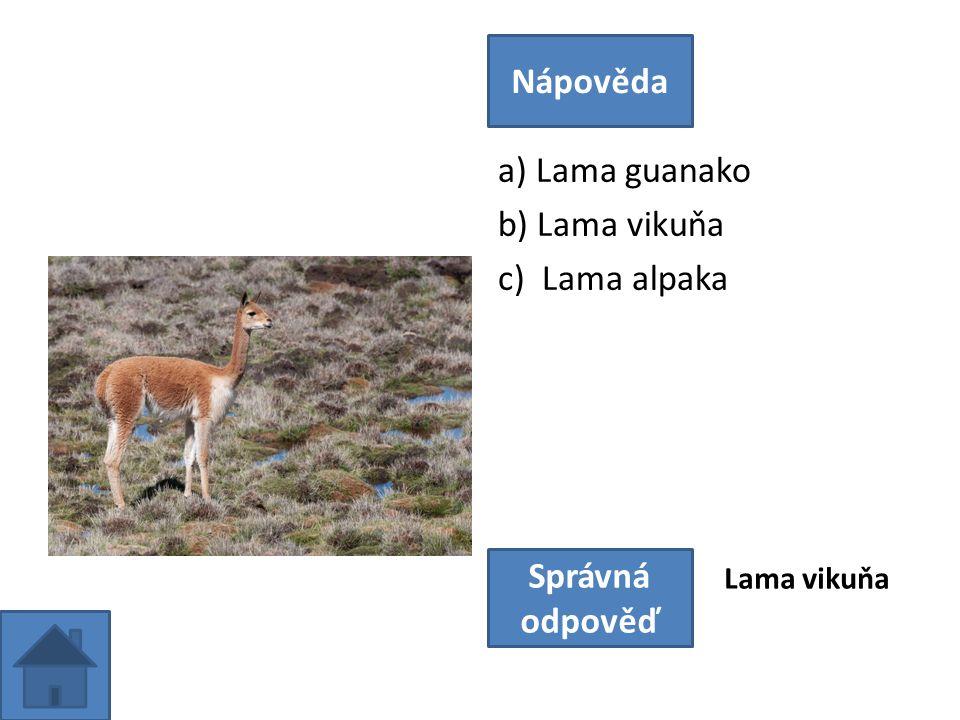 a) Lama guanako b) Lama vikuňa c) Lama alpaka Nápověda Správná odpověď Lama vikuňa