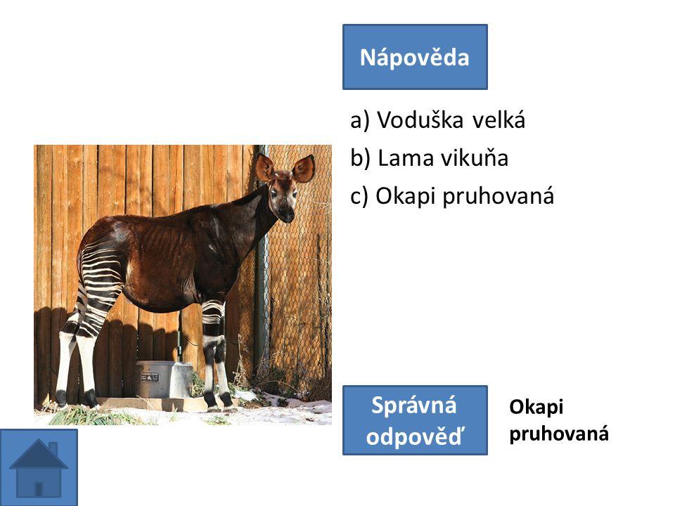 a) Voduška velká b) Lama vikuňa c) Okapi pruhovaná Nápověda Správná odpověď Okapi pruhovaná