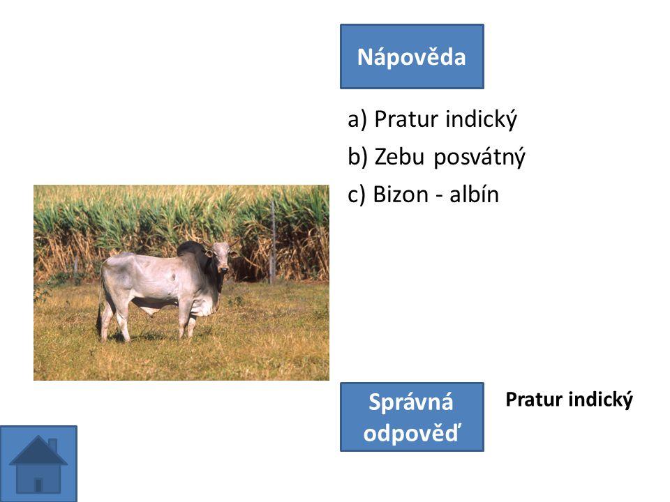 a) Pratur indický b) Zebu posvátný c) Bizon - albín Nápověda Správná odpověď Pratur indický