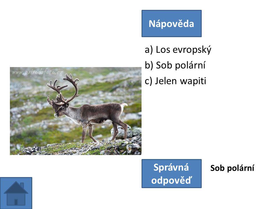 a) Los evropský b) Sob polární c) Jelen wapiti Nápověda Správná odpověď Sob polární