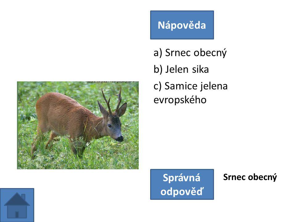 a) Srnec obecný b) Jelen sika c) Samice jelena evropského Nápověda Správná odpověď Srnec obecný