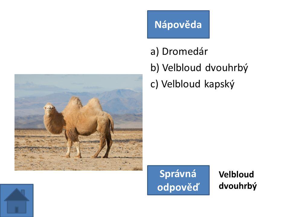 a) Dromedár b) Velbloud dvouhrbý c) Velbloud kapský Nápověda Správná odpověď Velbloud dvouhrbý