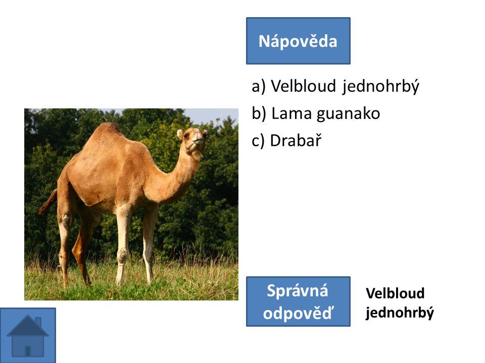 a) Velbloud jednohrbý b) Lama guanako c) Drabař Nápověda Správná odpověď Velbloud jednohrbý