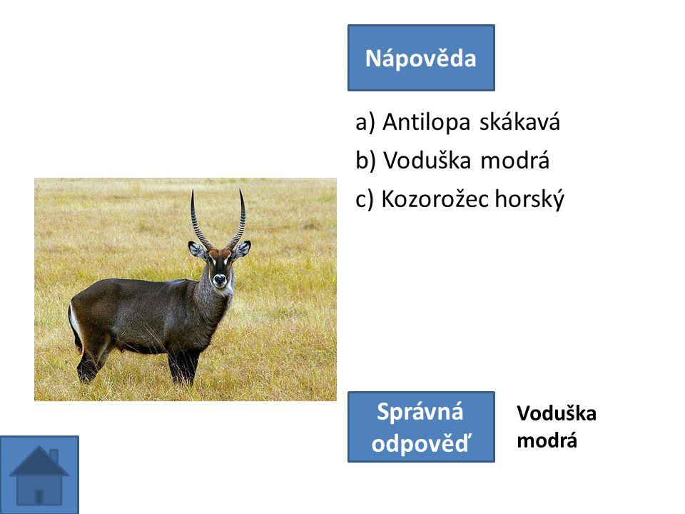 a) Antilopa skákavá b) Voduška modrá c) Kozorožec horský Nápověda Správná odpověď Voduška modrá