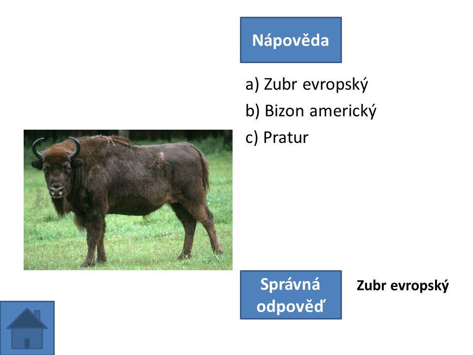 a) Zubr evropský b) Bizon americký c) Pratur Nápověda Správná odpověď Zubr evropský